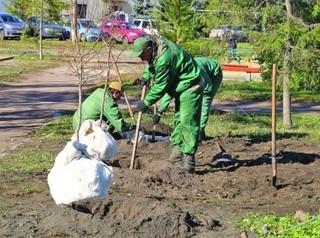 Предложено создать концепцию озеленения Иркутска