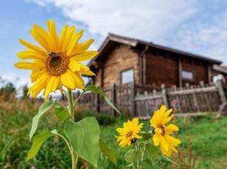 Почему банки пока мало выдают сельскую ипотеку?