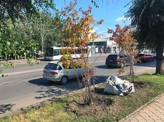 С 2020 года Красноярск начнут озеленять по новым правилам