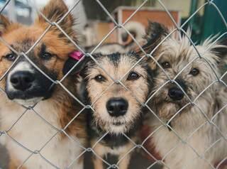 В Иркутской области появится государственный приют для бродячих собак