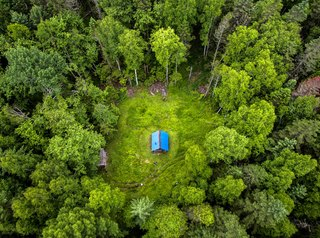 Росреестр расскажет, как воспользоваться «лесной амнистией»