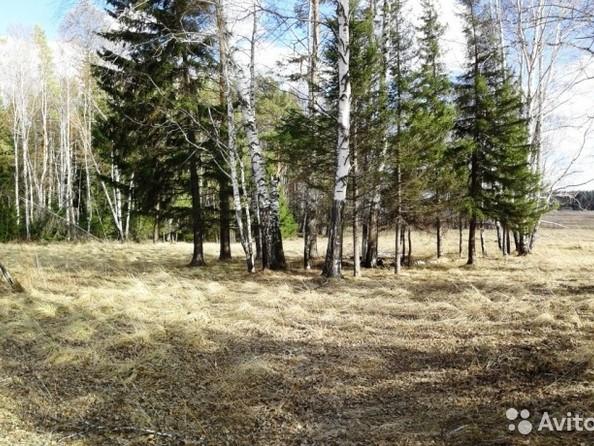 Продам  земельный участок, 35 соток, Емельяново. Фото 7.