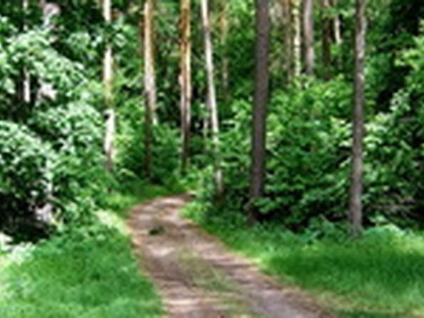 Продам  земельный участок, 72 соток, Чернолучье. Фото 3.